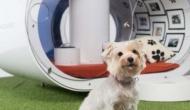 Samsung разработала современную собачью будку стоимостью $30 000